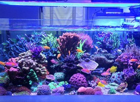 Akvaristika — more u stanu