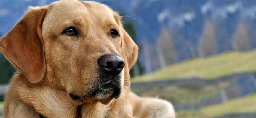Tvoj verni prijatelj pas