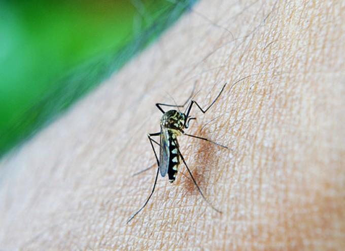 Kako izaći na kraj sa komarcima na prirodan način