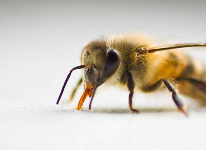 Pčelinji otrov i HIV