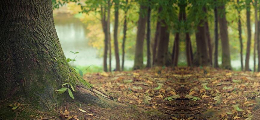 Magija drveća – isceljujuća moć prirode