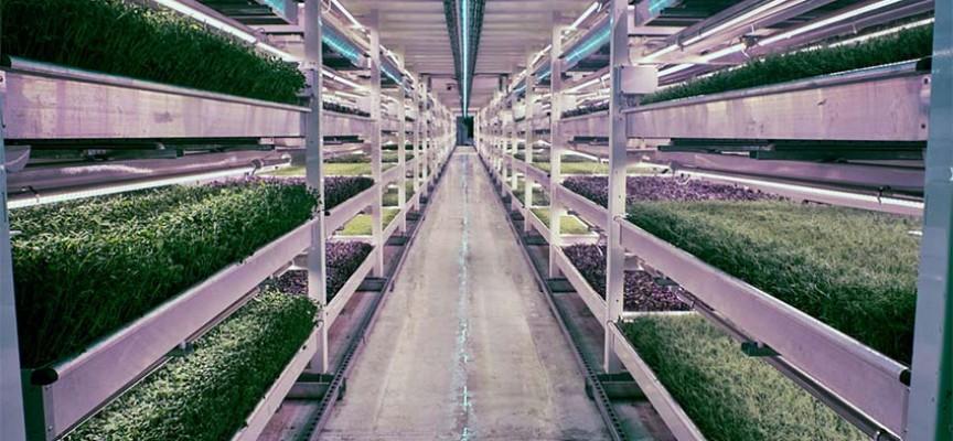 London je postavio prvu podzemnu baštu