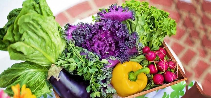 Ruska vlada zabranjuje sve GMO prehrambene proizvode radi zaštite zdravlja svojih građana