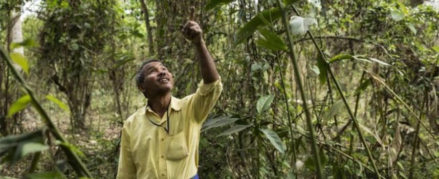 Čovek koji je sam posadio šumu