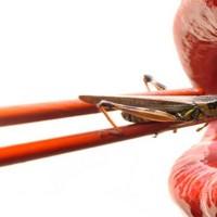 Potrebni su vam proteini? Hranite se insektima
