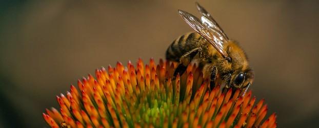 Nevidljivi ubica pčela — elektromagnetno zračenje